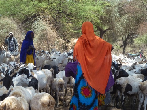 Borana women with sheep and goats at a traditional deep well water source, Garba Tulla, Isiolo, Kenya (photo credit: ILRI/Fiona Flintan).