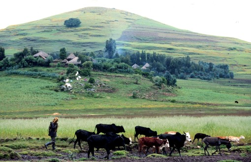 Farming scene in the highlands of Ethiopia (ILRI/Apollo Habtamu).