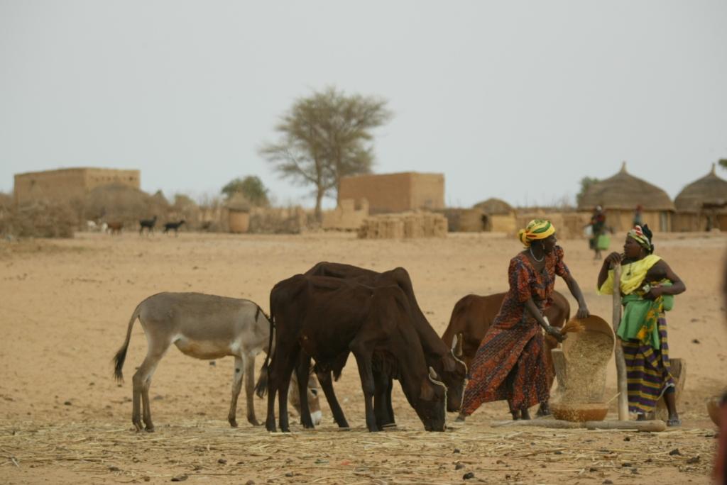 Village women and livestock in Niger (photo credit: ILRI/Stevie Mann).